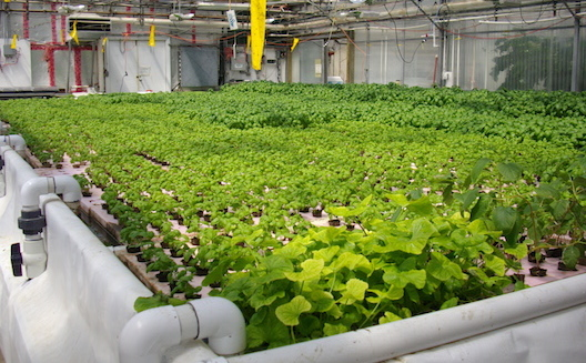 Egypt's agritech entrepreneurs bring the farm to the boardroom