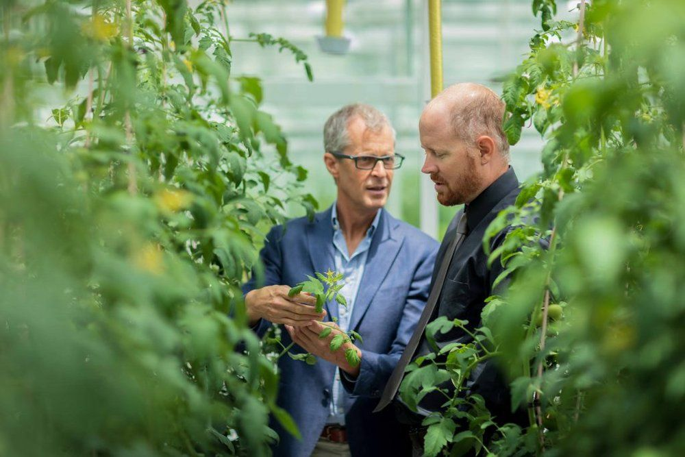 Red Sea Farms raises additional $6 million in pre-Series A round