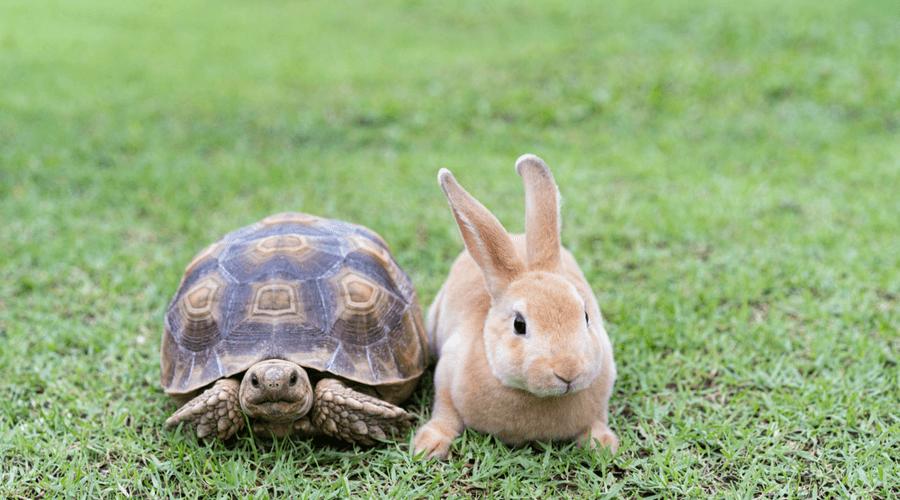 Teachers, technology and tortoises