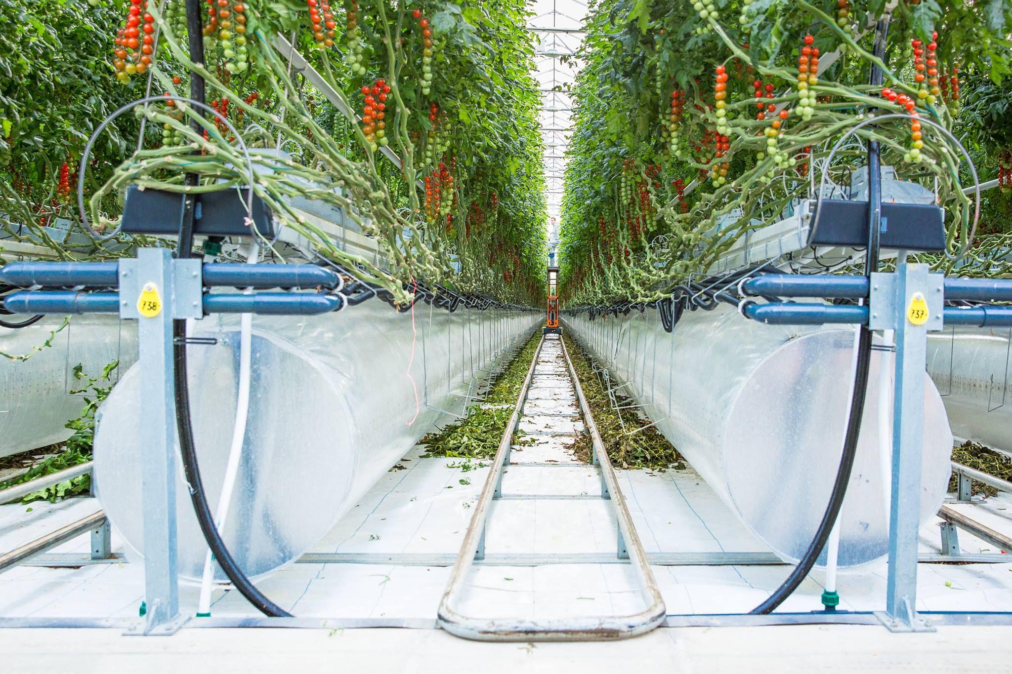 المزارع الذكية هي الطريق نحو تحقيق الأمن الغذائي