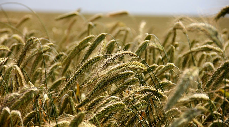 This is why MENA corporates should invest more in agriculture [Opinion]