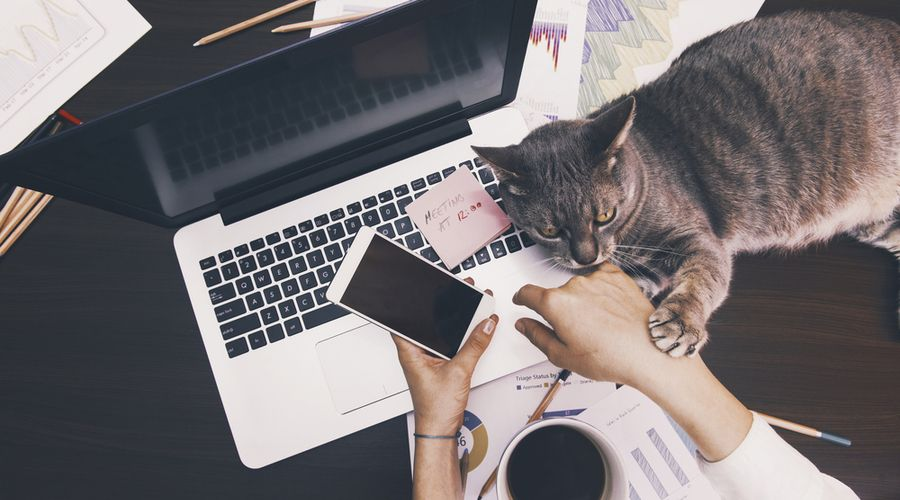 Will remote working become the new normal?