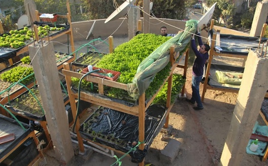 مؤسسة شادوف تنثر بذور التنمية المستدامة من خلال الزراعة على الأسطح في مصر