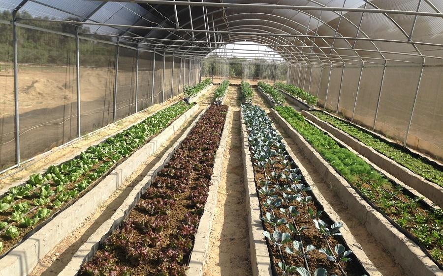 شركة مصرية تنجح في الزراعة من دون تربة وعلى أسطح المنازل