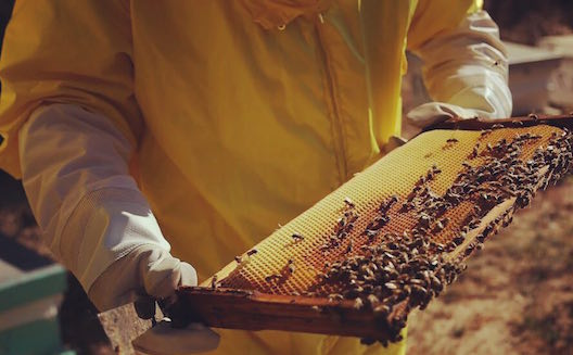 Sweet as honey: how this Lebanese startup founded a thriving business