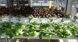 براعم التكنولوجيا الزراعية تتفتّح في الأوساط الريادية في لبنان