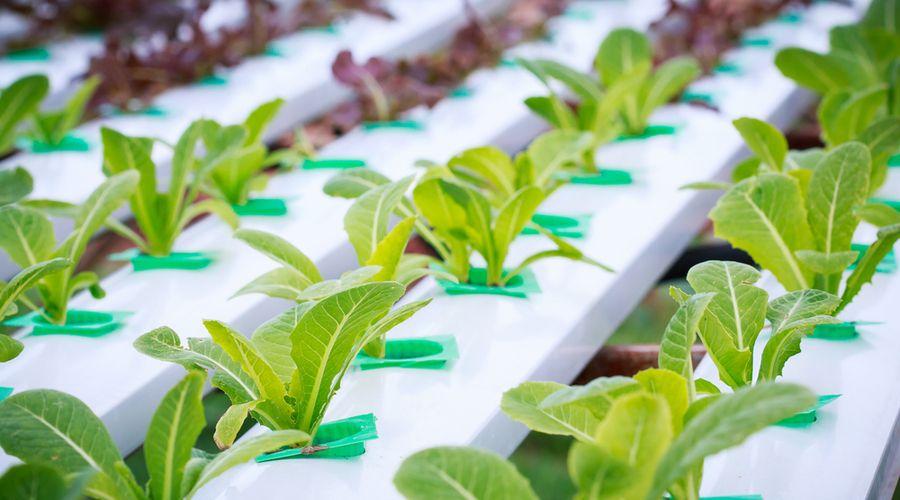 التكنولوجيا الزراعية تلعب دوراً هاماً وقت الأزمة