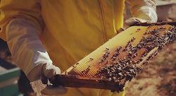 كيف استطاعت هذه الشركة الناشئة اللبنانية أن تطلق عملاً 'كالعسل'؟