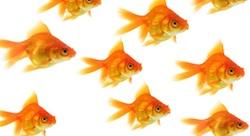 Entrepreneurs: Stop Innovating, Start Minnovating