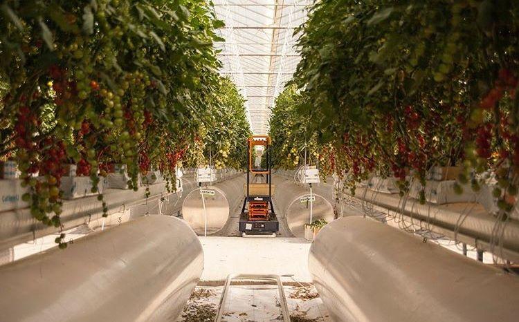 Pure Harvest raises $1.75 million