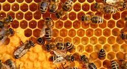 Putting Tunisian honey on the map